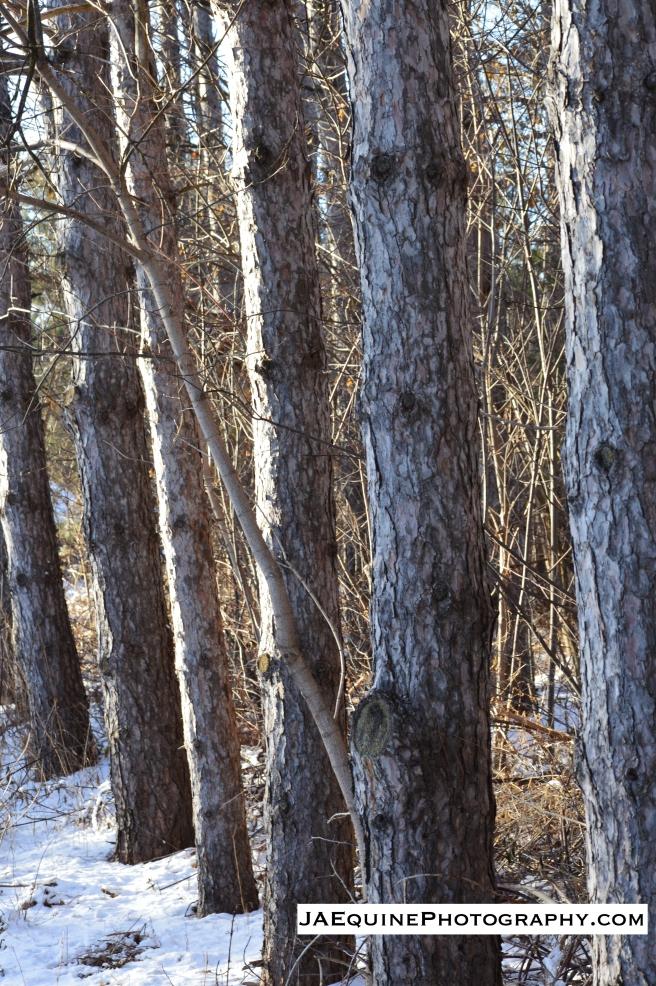 {Trees}