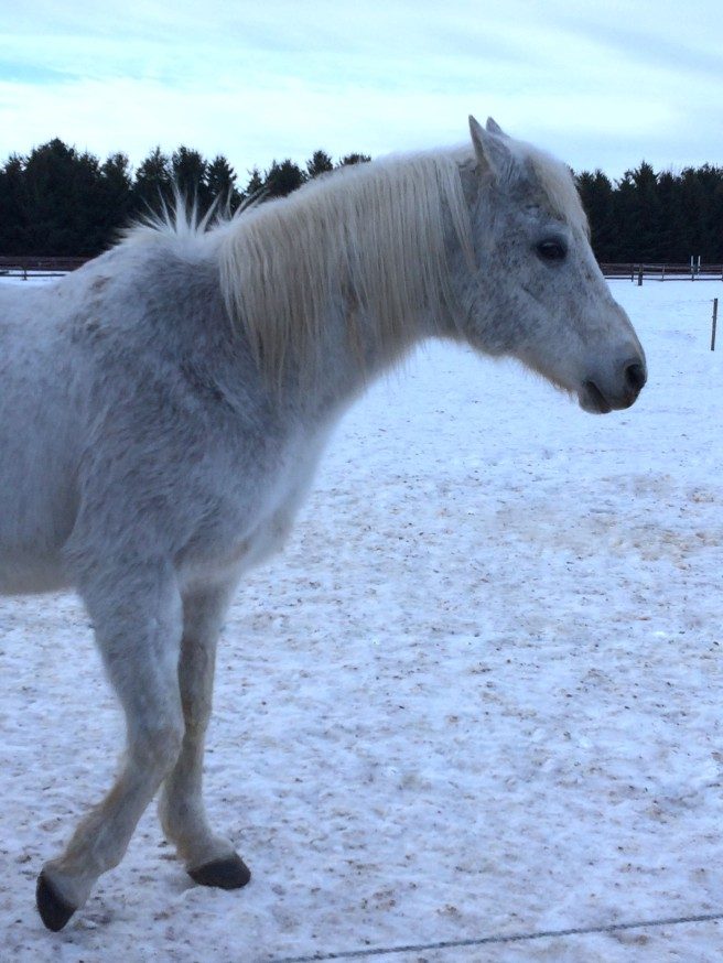 White Horse Edited